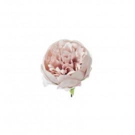 Peonia rosa antico