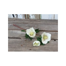 Fleur Christmas Rose